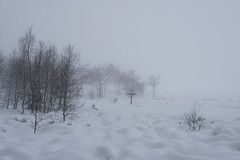 (JPetr) Tags: nature landscape venn hoge fagnes haut venen hohes