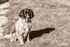 H41C2316 (joly_jeff) Tags: portrait paris canon noiretblanc hdr couleur pontneuf photographe poselongue eosmarkiii photosdeparis droitsréservés caisseaméricaine jeanfrançoisjoly jeffjoly equipeinteractivecom