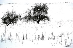 pals (txutis de can burrass) Tags: trees winter bw white snow black tree blancoynegro blanco landscape sticks nieve negro pals paisaje bn rbol invierno dibujo arbre blanc negre palos neu blancinegre paisatge boceto hivern