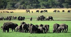 sri lanka-elephants- (Mobile/WhatsApp:00919495509009) Tags: