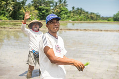 (kuuan) Tags: portrait bali 50mm takumar f14 worker farmer ricefield smc manualfocus ubud 5014 plantingrice 1450 f1450mm smctakumar50mmf14 sonya7 ilce7