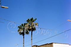 23_0024 (myrockethasnobrakes) Tags: city sky urban film 35mm tampa lights florida palmtree ybor gaybor historicybor