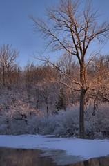 Lumire matinale  en fin d'hiver.../ End of winter, early morning light... (Pentax_clic) Tags: winter mars tree robert pentax quebec hiver warren kr arbre 2016 ilecadieux imgp2868