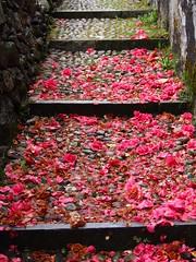 O Caminho para o Sacro Monte (jcspl) Tags: flor ortasangiulio