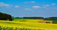 Yellow fields ... (Kat-i) Tags: blue trees sky nature yellow forest landscape outside bayern deutschland spring natur felder himmel gelb fields blau kati landschaft bume raps frhling katharina rapeseed 2016 wlder weihmichl nikon1v1
