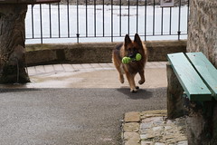 2016 - 26.4.16 Crail (17) (marie137) Tags: road new bridge sea sky beach dogs animals st landscape boats town sand crossing village harbour forth queensferry crail monans geman