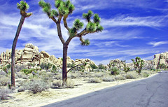 Rocky Road, JoshuaTree NP 4-13 (inkknife_2000 (8 million views +)) Tags: california cactus usa landscapes rocks desert joshuatree skyandclouds nationalparks rockclimbing rockyroad joshuatreenationalpark rockpiles joshuatreeblooms dgrahamphoto