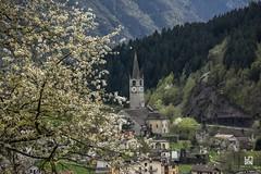 BACENO (Lace1952) Tags: primavera chiesa piemonte fiori ciliegio vco romanica valleantigorio ossola baceno nikkor18300vr italianikond7100