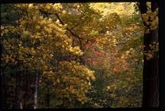 Fall (Malinku) Tags: trees tree fall nature fuji velvia fujifilm fujivelvia50 velvia50
