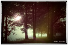 Am Weiher (NatureArt by Wolfgang) Tags: sun fog vintage nebel sigma retro lensflare flare rahmen morgensonne weiher dp1s