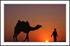 Dans le dsert du Thar -  In the Thar Desert (diaph76) Tags: sunset sun india man soleil desert silhouettes dromedary paysage extrieur rajasthan homme coucherdesoleil inde landsacpe dromadaire chamelier