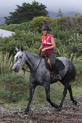 IMG_EOS 7D Mark II201604039886 (David F-I) Tags: horse equestrian horseback horseriding trailriding trailride ctr tehapua watrc wellingtonareatrailridingclub competitivetrailriding sporthorse equestriansport competitivetrailride april2016 tehapua2016 tehapuaapril2016 watrctehapuaapril2016