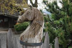 Bressanone (Luciana.Luciana) Tags: cavallo altoadige legno brixen bressanone neveschnee sudtirol