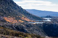 Tarn Shelf_3 (mckenart) Tags: autumn mountains landscape flora australia alpine tasmania wilderness fagus tarnshelf nothofagusgunii deciduousbeech
