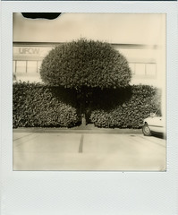 5050 1st Avenue South (R. Drozda) Tags: seattle tree film car polaroid sx70 washington bush parkinglot parking hedge shrub sodo iridio drozda impossibleproject bwforsx70 roidweek2016