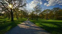 Afternoon walk in the park (TanzPanorama) Tags: park trees light sunset sunlight tree london nature zeiss landscape afternoon bright path walk greenwich wideangle sunrays sunstar fe1635 fe1635mmf4zaoss variotessartfe41635 sonya7ii ilce7m2 tanzpanorama
