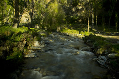rio largo (ebsigma) Tags: naturaleza rio river atardecer flor amarillo vida araa curva largaexposicion dilar