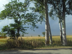 Day 117, Wheat Fields at Haripur, Pakistan. (Somersaulting Giraffe) Tags: road trees pakistan sunlight daylight outdoor wheat ngc fields crops kpk haripur khyberpakhtunkhwa
