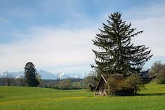 Frhlingsausflug in die Alpen (Alexander Burkhardt) Tags: bayern htte berge alpen landschaft baum frhling oberschering reintal