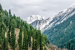 Kashmir is Paradise on Earth... (Nirmalya Pandit) Tags: travel india mountain snow tree nikon cloudy kashmir jammukashmir pahelgam d3300