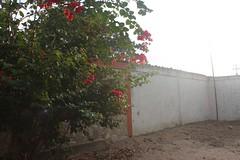 IMG_1285.CR2 (dernst) Tags: trinitarias bougainvilleas