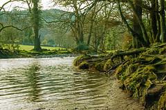 DSC_0023_edited (Lord Edam) Tags: winter nature water grass wales river stones walk wildlife betwsycoed conwy afon llugwy