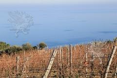 Calabria_Natale2015_028