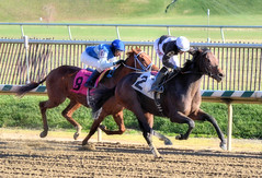 "2015-12-19 (12) r5 Victor Carrasco on #2 Charmed Victory (JLeeFleenor) Tags: photos photography md marylandracing marylandhorseracing jockey جُوكِي ""赛马骑师"" jinete ""競馬騎手"" dżokej jocheu คนขี่ม้าแข่ง jóquei žokej kilparatsastaja rennreiter fantino ""경마 기수"" жокей jokey người horses thoroughbreds equine equestrian cheval cavalo cavallo cavall caballo pferd paard perd hevonen hest hestur cal kon konj beygir capall ceffyl cuddy yarraman faras alogo soos kuda uma pfeerd koin حصان кон 马 häst άλογο סוס घोड़ा 馬 koń лошадь bay winner maryland"