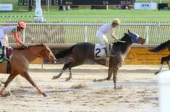 2015-12-31 (44) r4 Jeremy Rose on #2 Escrow Kid came 5th (1) (JLeeFleenor) Tags: horses caballo cheval photography md photos uma maryland cal jockey jinete cavallo cavalo pferd equestrian kuda alogo equine hest thoroughbreds soos hevonen cuddy paard cavall kon koin laurelpark  jokey fantino hst ceffyl  jquei  ko faras hestur  perd ngi  konj    capall beygir yarraman dokej rennreiter  pfeerd marylandhorseracing marylandracing   okej kilparatsastaja jocheu