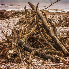 sticks and stones (HHH Honey) Tags: wood sea beach seaside sticks pebbles bonfire devon budleighsalterton sony70300g sonya850 minimoonx