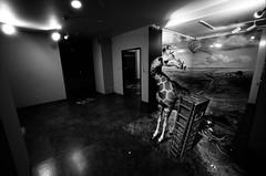 wonked giraffe (troutfactory) Tags: blackandwhite bw film monochrome strange japan weird wideangle odd  himeji giraffe analogue opticalillusion trickphotography unsettling 15mmheliar  voigtlanderbessal sunpark   taiyokoen taiyopark kodak400txpushedto800
