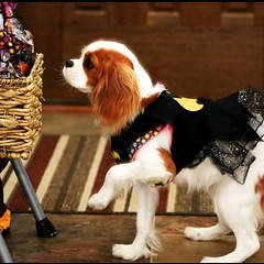 "Willow dressed for Halloween. • <a style=""font-size:0.8em;"" href=""http://www.flickr.com/photos/72564046@N04/24452074430/"" target=""_blank"">View on Flickr</a>"