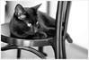 * (Dit is Suzanne) Tags: blackandwhite cat kat zwartwit boris kater кот боря borya sigma30mmf14exdchsm чернобелый views100 canoneos40d img2641 борис 08092014 ©ditissuzanne kotborya котборя