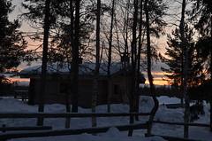 Luosto ( Fn) (maurobrock) Tags: freddo luce finlandia ghiaccio crepuscolo foresta luosto maredelnord maurobrock