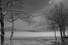 Week 5: Landscape, Black an White (Beate Nilsen) Tags: longexposure light blackandwhite moon mist snow cold tree ice monochrome night frozen outdoor serene nightphoto nordnorge bod week5 northnorway vatnvatnet 52weekschallenge dogwood52