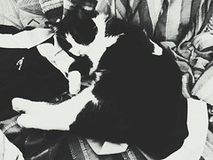 """Sleeping Cat In Black And White"" (Anschuetz Photography) Tags: sleeping blackandwhite pet cats pets cute cat blackwhite sleep snapshot chillin ilovemycat chill bnw iphone ilovecats 6s"