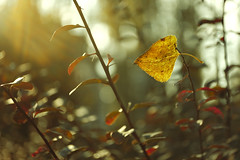 _DSF7481 (Evren Unal Photography) Tags: autumn winter sunset sky sunlight plant blur color tree green texture nature colors field animal closeup is leaf alone dof bokeh outdoor ngc foliage fujifilm coming depth carlzeiss beatifull yellor touit touit2850m