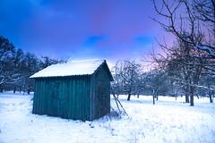 Winter (MarcEhrmann) Tags: wood old schnee winter white house snow cold tree ice apple forest abend sonnenuntergang htte dmmerung kalt eis wald bume morgen baum apfel klte weis