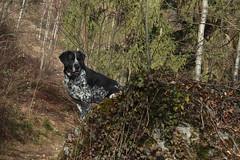 Mastik (bulbocode909) Tags: nature hiver vert arbres chiens forts