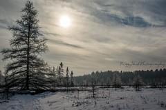 Mer Bleue (Peg Skof) Tags: trees winter ontario canada cold walk ottawa hike trail boardwalk ncc bog matte merbleue