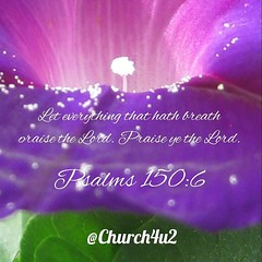 """Psalms 150-6 """"Let every thing that hath breath praise the Lord . Praise ye the Lord."""" (@CHURCH4U2) Tags: pic bible verse"""
