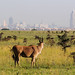 Eland & Nairobi