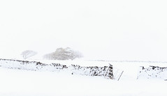 Winter in Yorkshire (chrissmithphotos1) Tags: park christmas winter white snow cold tree ice nature beautiful wall season landscape outdoors frozen gate frost december branch farm north january scenic nobody land february climate tranquil forast