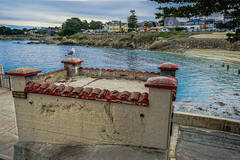 DSC00461--Pacific Grove, CA (Lance & Cromwell back from a Road Trip) Tags: california sony montereybay montereycounty pacificgrove westcoast loverspoint montereypeninsula sonyalpha