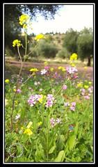 #Jordan #amman #marj_alhamam #um_abhara #flower #flowers #floral #green #spring #bokeh #mobilography #galaxy_note5 #galaxy_note_5   # # #_ #_ # # # # # # #5 (alrayes1977) Tags: flowers flower green floral spring bokeh amman jordan  mobilography       marjalhamam  galaxynote5 5  umabhara