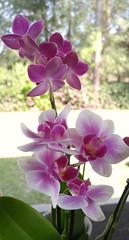 Espresso cup orchids