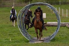 DSCF0365.jpg (Ed Traywick) Tags: horses horse leo robyn obstacles horseclinic