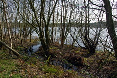 25.3.16 Delamere Forest 40 (donald judge) Tags: trees water forest countryside cheshire mere delamere
