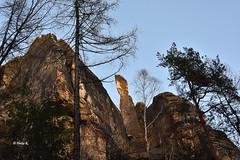 The special one (heikecita) Tags: mountain nature berg germany deutschland nikon outdoor natur hills sachsen elbsandsteingebirge d7200