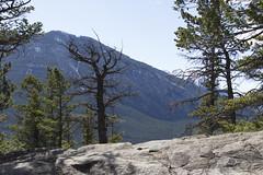Banff, Tunnel Mountain Hike, April 9 2016 (77)_e_apr_11_16 (Velates) Tags: canada mountains alberta rockymountains banffnationalpark